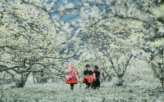 mùa xuân du lịch tây bắc